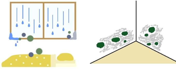 カビ/床の腐食